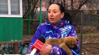 Бездомная дворняга вывела своих щенков к жителям Радиоцентра