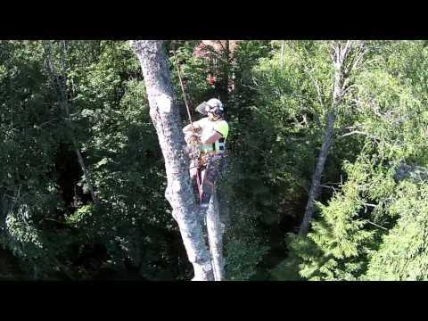 Avancerad Trädfällning i Nora AB #2
