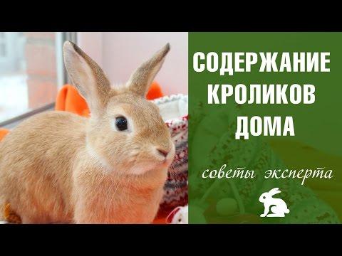 кролики кормление и уход в домашних условиях фото
