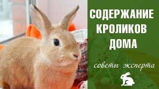 видео Содержание декоративных кроликов: с чего начать?