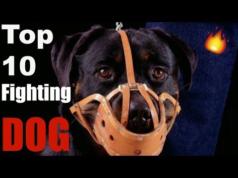 Top 10 Fighting Dogs Breeds / TOP 10 FIGHTING DOG BREEDS/ fighting dog breeds