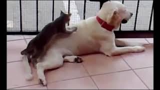 Amazing movies best funny animals