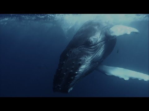 Google and NOAA partner on Pattern Radio: Whale Songs