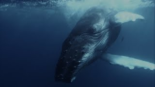 Whale Songs and AI, for everyone to explore