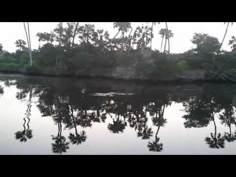 Daytona Beach Florida Area Natural Photography Video Scenery Fishing Guide FL Bird Watching