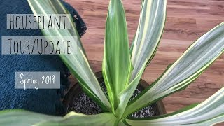 House Plant Tour/Update | Best Houseplants | Come check out my houseplants