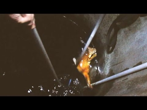 Rescue Falling Cat in the Well