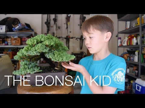 The BONSAI KID