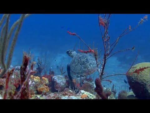 Aflevering 5 Marine Life
