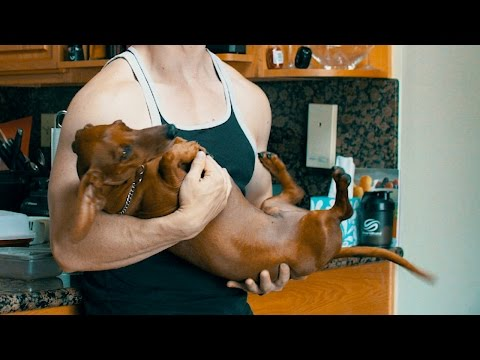 How to hold a wiener dog
