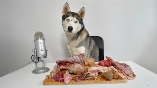 ASMR Husky Reviewing Exotic Raw Meat Parts!
