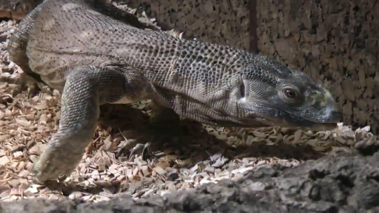 how to make anaconda work like pythonista