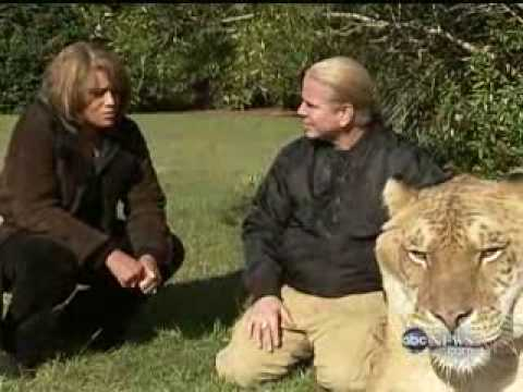 ABC Nightline - Featuring Hercules the Liger - YouTube