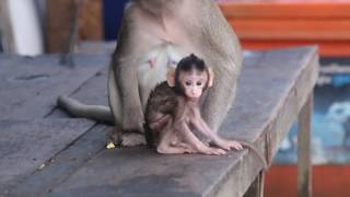 Episode One  So cute baby monkey Rufa and mom Rufina