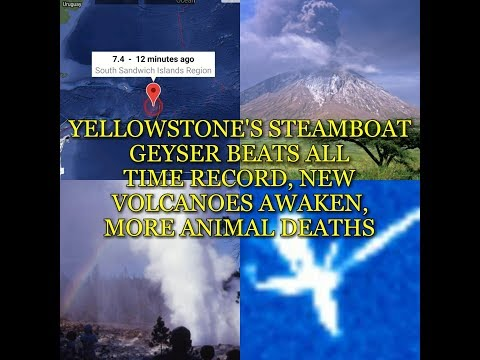 YELLOWSTONE'S STEAMBOAT GEYSER BEATS ALL TIME RECORD, NEW VOLCANOES AWAKEN, MORE ANIMAL DEATHS