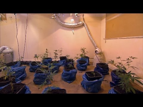 Gang 'Sells Weed To Primary School Children'