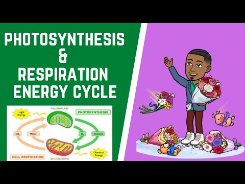 Energy Flow & Chemical Cycling 101