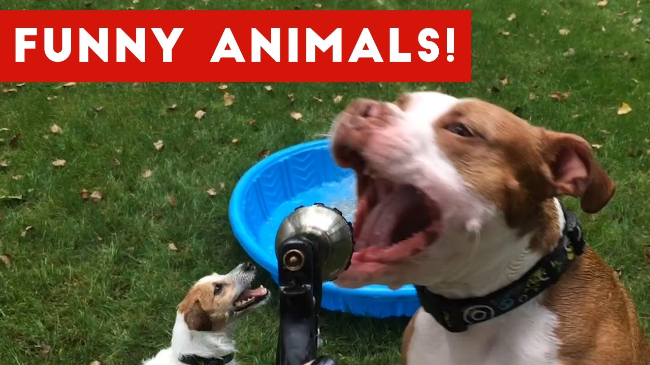 Funniest Pet Clips, Bloopers & Moments Caught On Tape 2017   Funny Pet Videos