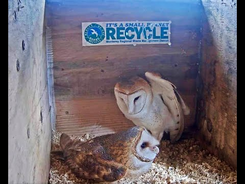 MRWMD - Barn Owl WebCam