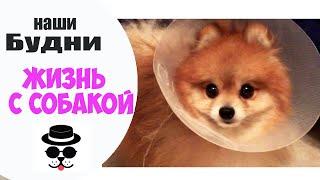 Vlog🐶Гетсби сделали операцию\Лечение\Капельницы(Всем привет)Это видео будет о моей собаке Шпице-Гетсби. Две недели назад у нас сложилась неприятная ситуаци..., 2015-09-24T10:55:08.000Z)