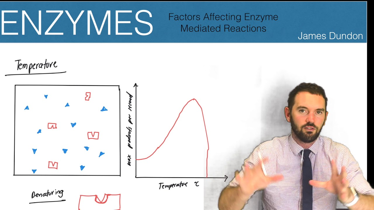 x-factor my enzyme reaction!!!