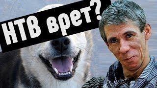 Панин с собакой - НТВ ВРЕТ? [ЖизаТВ]