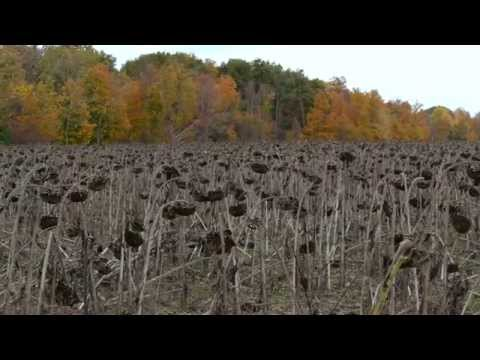 Roush Lake Fish And Wildlife Area | Indiana DNR