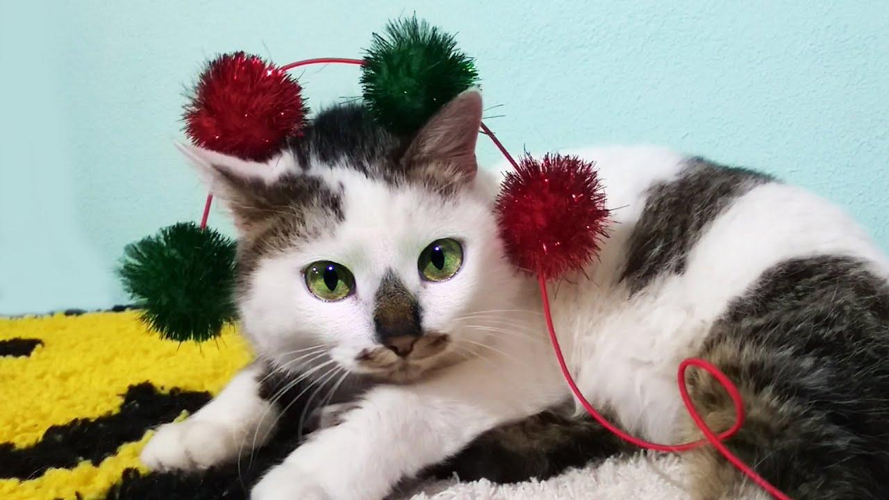 Кошка Карамелька и котенок Мурка играют с Лизой - YouTube