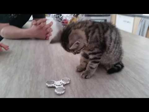 Kitten vs Fidget Spinner