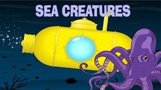 Kids Learn Ocean Animals | Explore Underwater Sea Creatures | Mighty Morphin