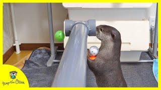 カワウソビンゴと塩ビ管で遊んでみる!Otter Bingo Playing with PVC Pipe