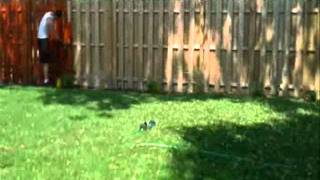 Fence Staining Job By Paradise By Matt