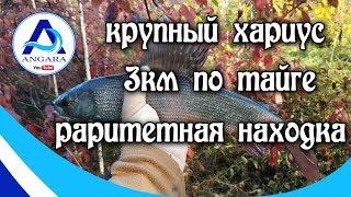 Рибалка. Харіус. Йдемо три кілометри по тайзі. Іркутськ. Angara.