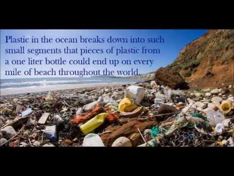 Ocean Pollution: Marine Life in Danger