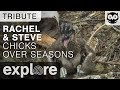 Rachel and Steve's Chicks Over the Seasons - Audubon Osprey - Tribute