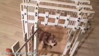 Клетки для собак и кошек в Уфе | Спокойное сердце