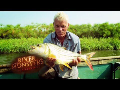 The Barbel Run Frenzy - River Monsters