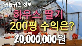 귀농귀촌 정보)딸기 하우스 200평 수익은? #하우스 …