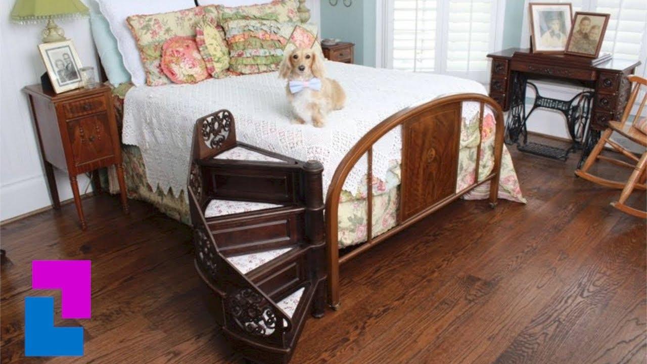 Twój Pies Nie Może Wejść Na łóżko Oto Rozwiązanie