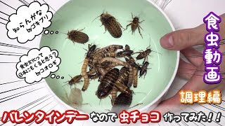 【バレンタインデー】生きたゴキブリ達を調理して虫チョコにしてみた【調理編】 バレンタインデー 検索動画 30