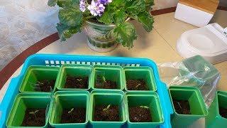 Посадка томатов на рассаду моим проверенным способом.Январь 2019