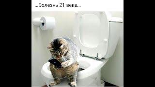 Кошачий дом😻