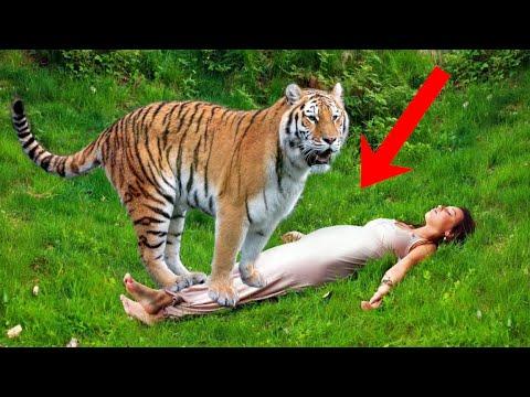 Тигр тащил беременную девушку в зубах... Увидев это люди были в изумлении. Время шло на секунды...
