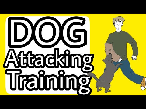 Dog Attacking Training Basics Episode-1 ( Hindi )