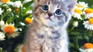 Кошка с ромашками в усах