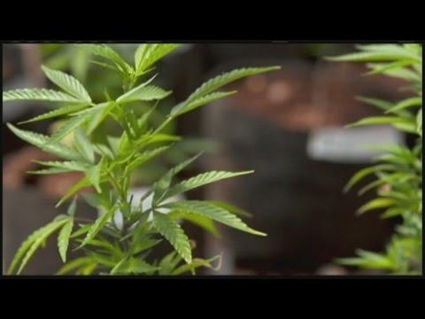 Senate debates bill to reform Massachusetts marijuana laws