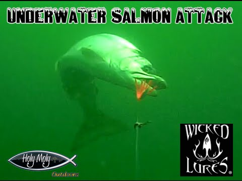 Underwater Salmon Attack Wicked Lures