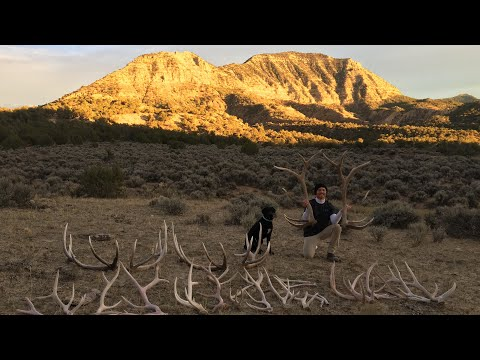 SHED HUNTING COLORADO- 3 BIG ELK SETS
