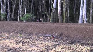 2014 Northern California turkey hunt with an airgun