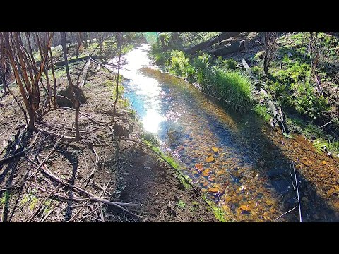 Small Stream Rainbow Trout Fishing